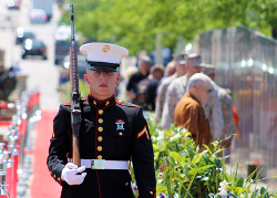 Honor Guard Marine